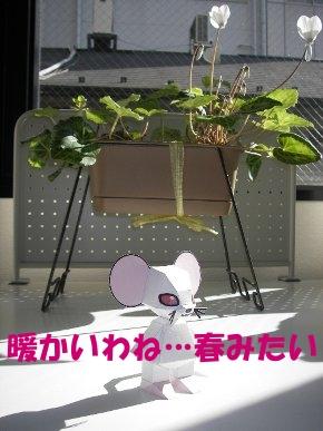 asanohikari02.JPG